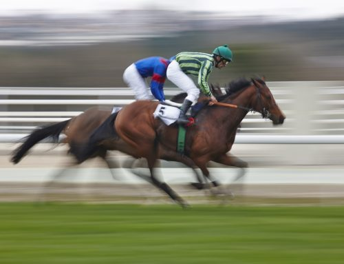 EXPERT BETTING ADVICES: Horse Racing