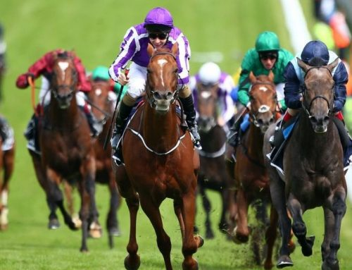Latest great results with Malbot Horse Racing!